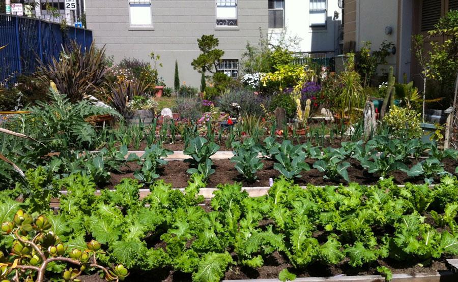Tenderloin People's Garden