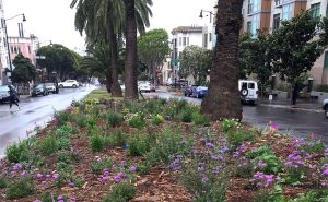 Dolores Street Pollinator Boulevard