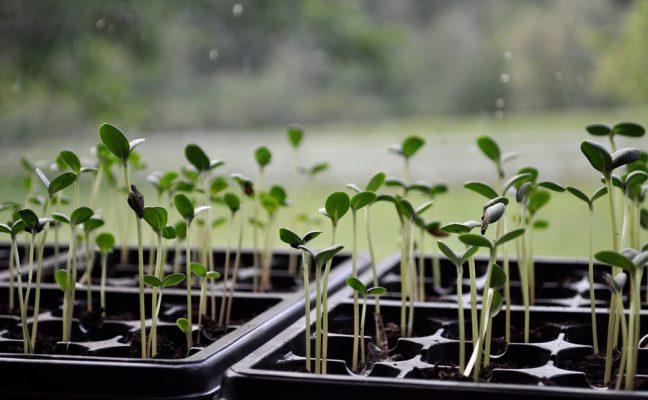 Growing Greener Schoolyards Conference