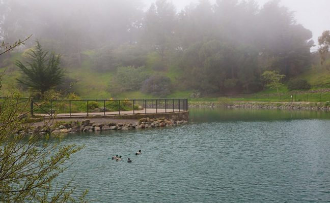 McNab Lake Restoration