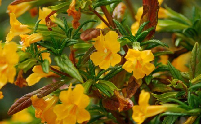 Native Plant Restoration