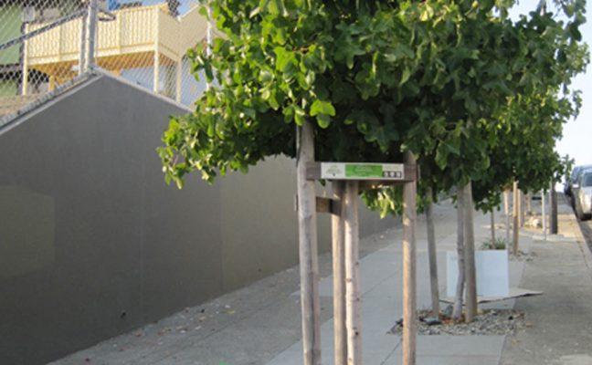 Visitacion Valley Neighborhood Tree Planting