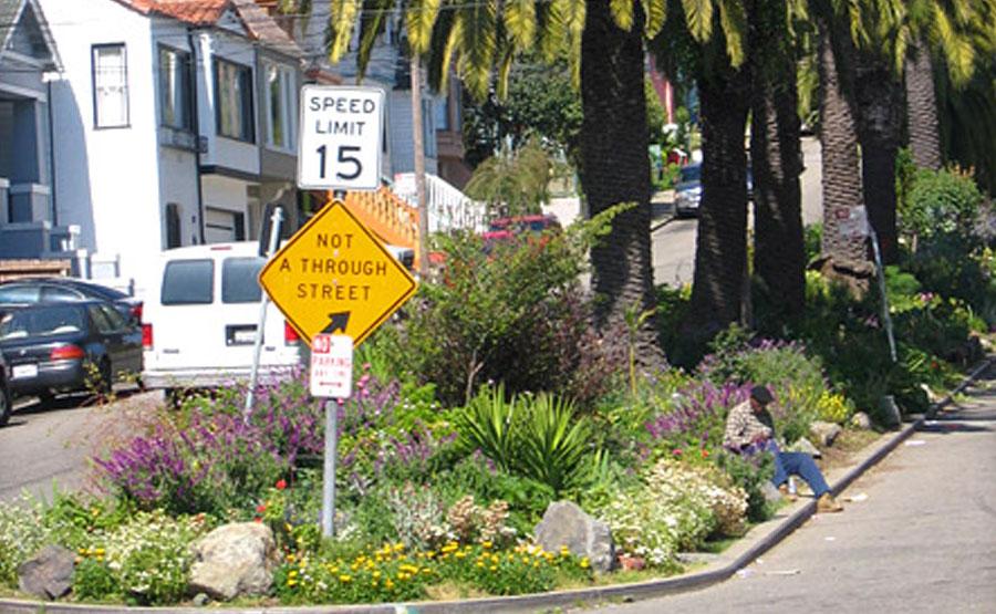 Greening Our Street Medians