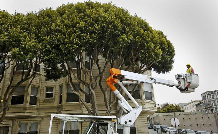 Tree Relinquishment Program